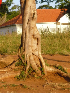 Gotta be a Hobbit Tree - Buvuma Island