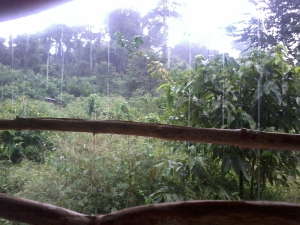 The dense jungle just beyond the church building