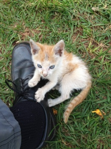 A Waisana kitten for mousing, a mighty warrior lion in this little body that continually attacked my shoelaces the whole time I was there.